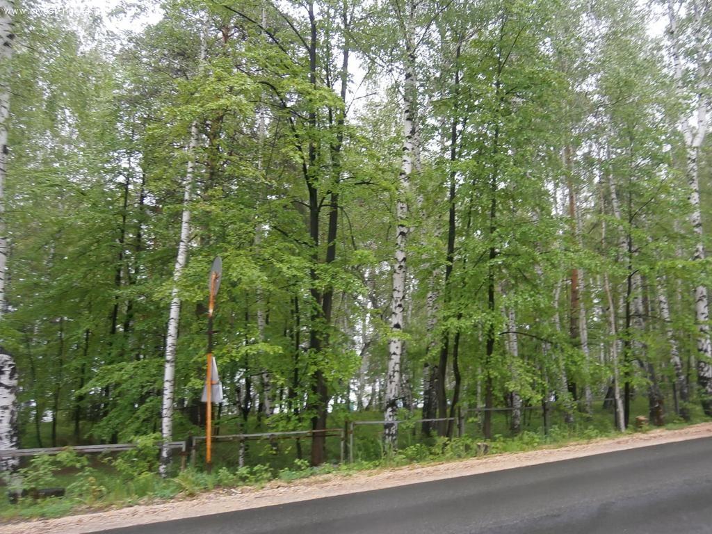 """Земельный участок """"Зеленый мыс"""", лес"""
